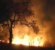 ¿Quién quema los bosques?